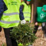 Programul de reîmpădurire ''Pădurea de Mâine'' încheie o nouă etapă