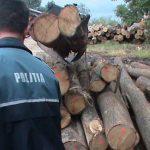 Amenzi de peste 24.000 de lei și 373,19 mc de lemn confiscat în urma unor controale a IPJ Alba
