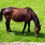 Hoț de cai prins de polițiști din Vințu de Jos