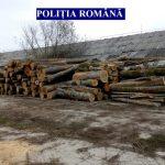 Peste 238 de mc de lemn confiscați de la o firmă din Valea Lungă