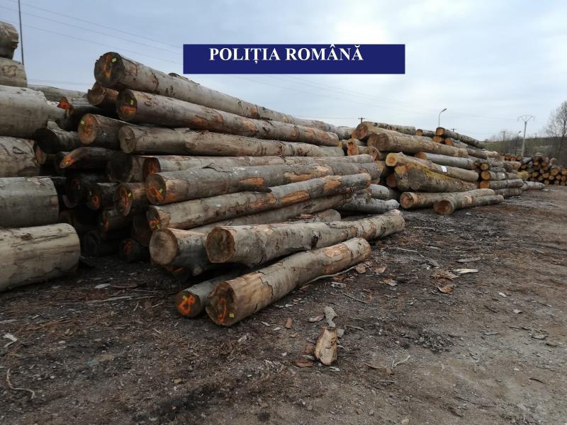 13,6 mc de buștean rotund confiscați de polițiștii Secției 9 Poliție Rurală Câmpeni