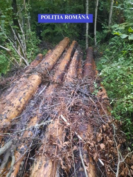 """20 de mc de material lemnos confiscați în urma a două controale din cadrul operațiunii """"Scutul Pădurii""""  (foto)"""