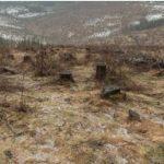 Ioan Lazăr:''Nu îl trimiteți din nou în Parlament pe cel care ne-a ras pădurile județului!''