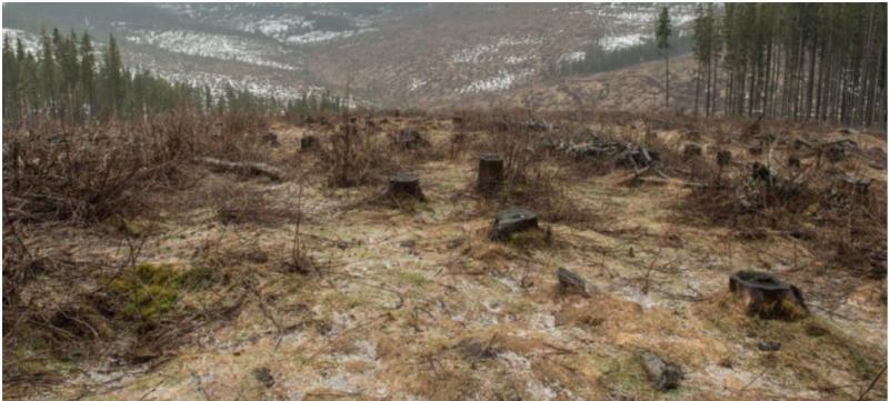 """Ioan Lazăr:""""Nu îl trimiteți din nou în Parlament pe cel care ne-a ras pădurile județului!"""""""