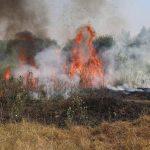 Aiud: Incendiu de vegetație în zona releului