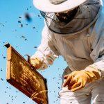 Cum să ai succes în apicultură? Pași esențiali de urmat la început de drum